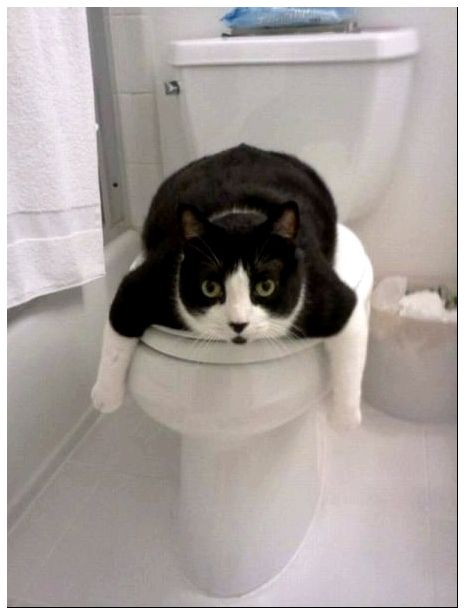 Catsmob.com - The coolest pics on the net!